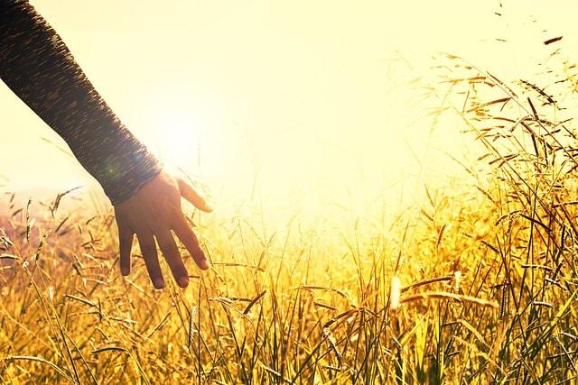 main blé